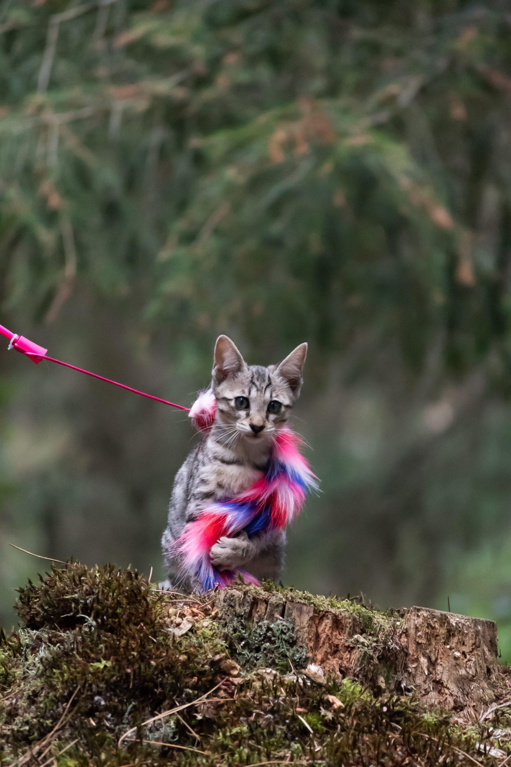 kat zittend met speeltje