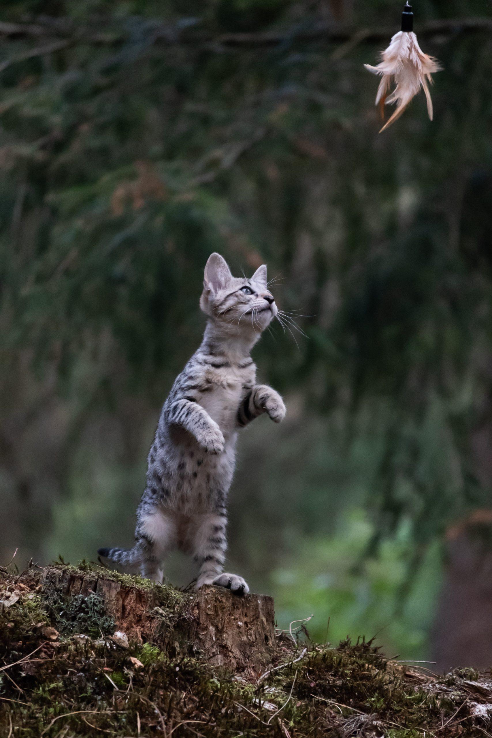 kat met 2 poten de lucht in